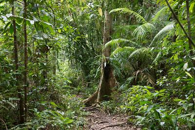 Bako National Park, Sarawak, Borneo