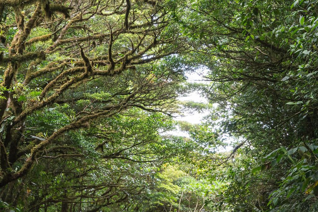 Monteverde Cloud Forest Reserve, Monteverde, Costa Rica