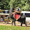Angkor Thom, located near Siem Reap - touristy elephant rides