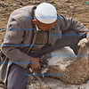 Sheep shearing, Sunday market, Kashgar