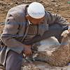 Sheep shearing, Sunday market, Kashgar