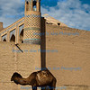 Camel outside Khiva City Walls, Uzbekistan