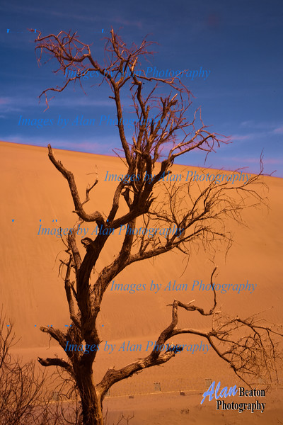 """Barely Surviving"", Echoing-sand Mountain, Dunhuang"