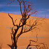 """""""Barely Surviving"""", Echoing-sand Mountain, Dunhuang"""
