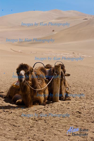 Time to rest!, Singing Sands, Mingsha Hills, Dunhuang