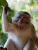 Monkey near Phra Nang Beach