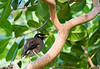 Bird  on Ko Phi Phi