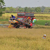 Along the road between Sukhothai and Chaing Rai -- rice harvesting