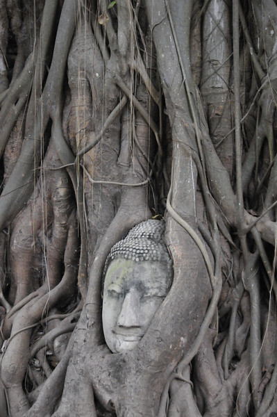 Ayutthaya - Buddah face in the tree