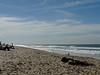 011 Surfers Paradise