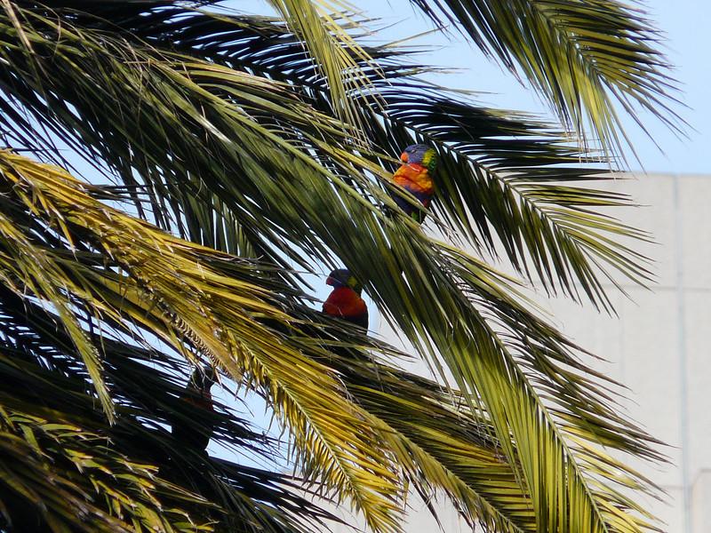 001 birds at Gordon Reserve (Park) near Parliament