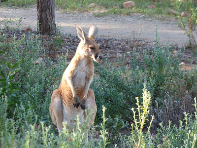 2014 Alice Springs, Australia (includes trip over and OzFest)