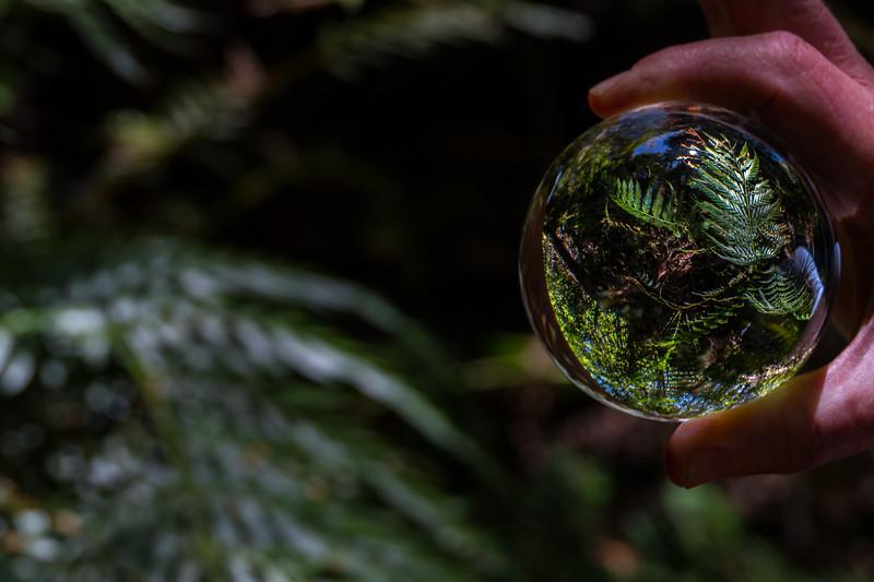 2018  SONY rainforest2_16.jpg