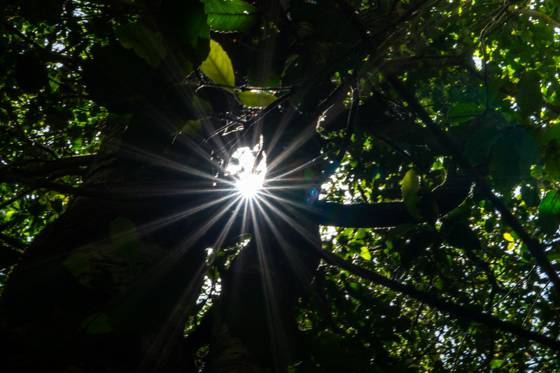 2018  SONY rainforest2_7.jpg