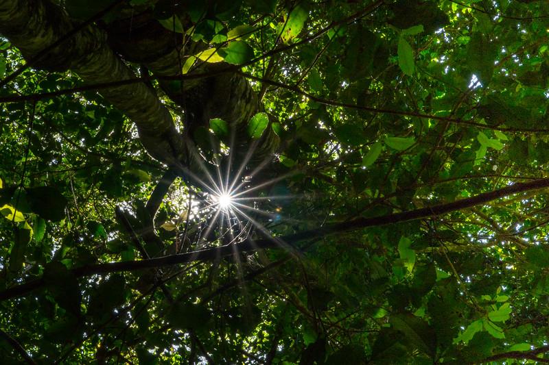 2018  SONY rainforest2_4.jpg