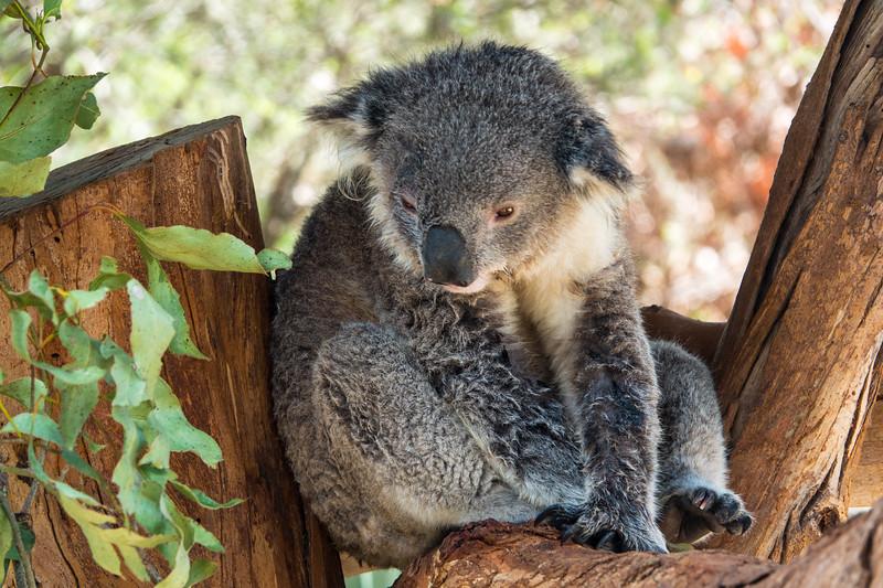2018  SONY Australia penguin tour_386.jpg