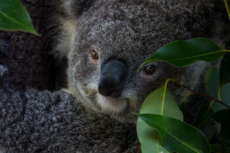 2018  SONY Australia cairns_55.jpg