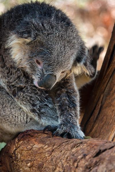 2018  SONY Australia penguin tour_382.jpg