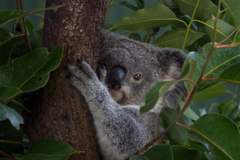 2018  SONY Australia cairns_59.jpg