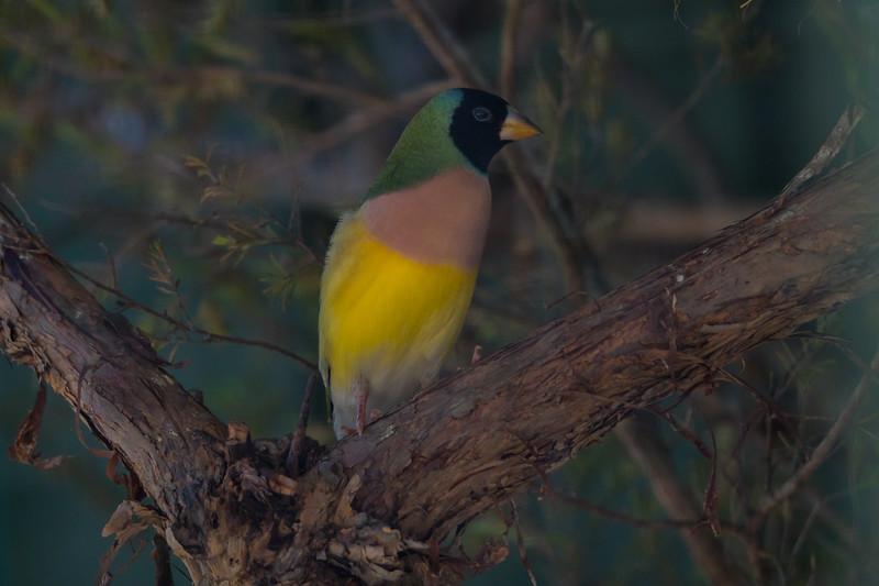 2018  SONY wildlife_153.jpg