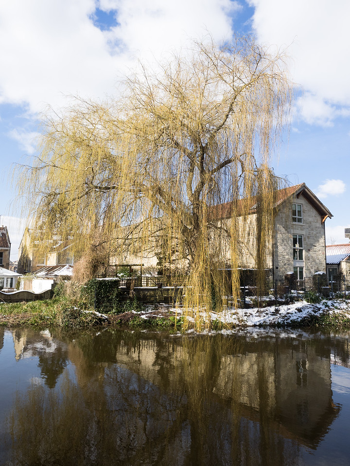 More weeping willow by the canal...