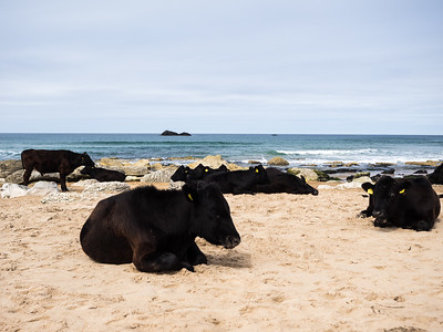 They seemed very content on the beach,