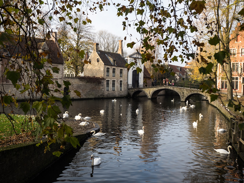 "Lots of swans down at The Minnewater (Lake of Love). I couldn't help thinking of In Bruges again:<br /> <br /> ""How can f**king swans not f**king be somebody's f**king thing, eh? How can that be?"""