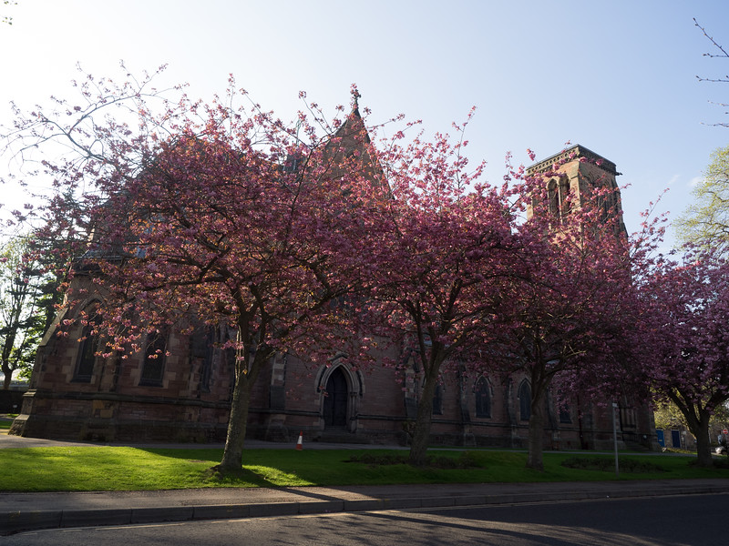 The cherry blossoms were in full bloom in Inverness. This was close to where I was staying, by the River Ness.