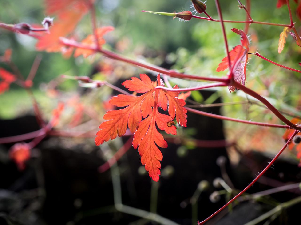 Red leaf.