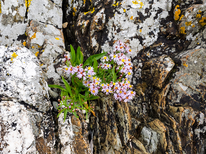 Rock flowers.