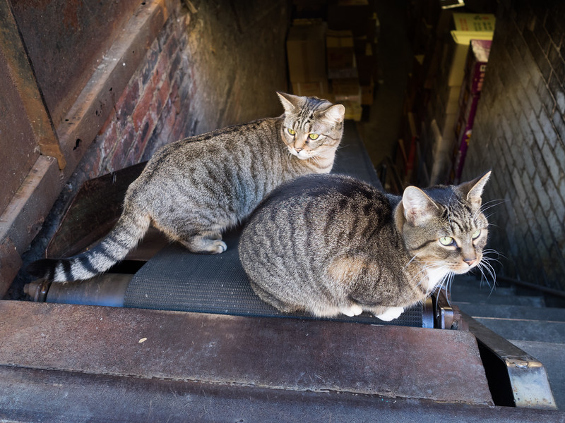 A couple of very friendly Chinatown cats - they came running up the ramp when they saw me.