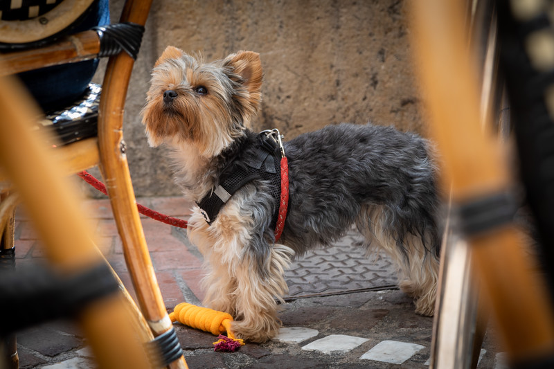 A Dog at the Café Clemenceau