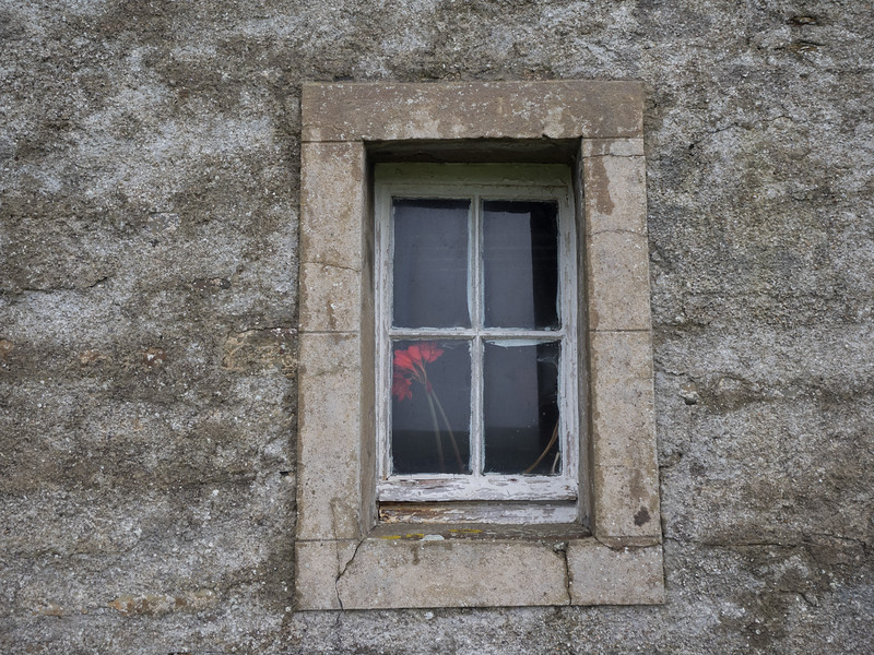 Some flowers in a window at Skaill House.