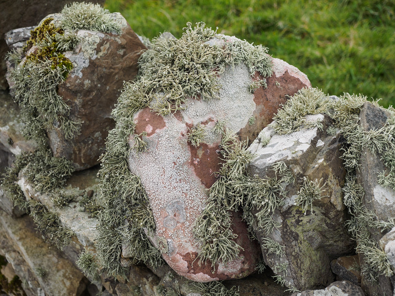 Lichen on the dry stone walls.