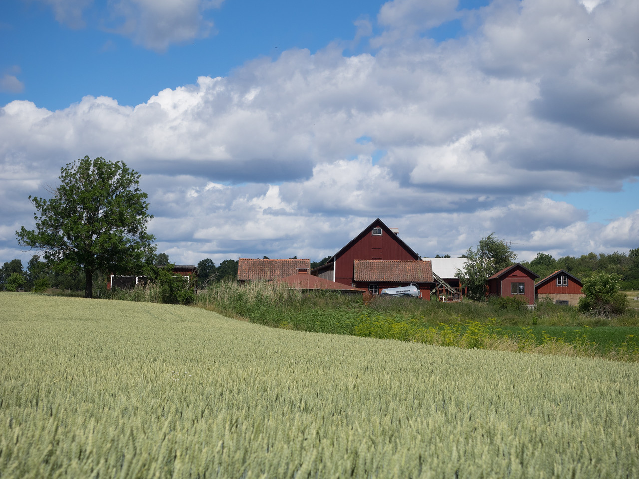 More red barns on Birka