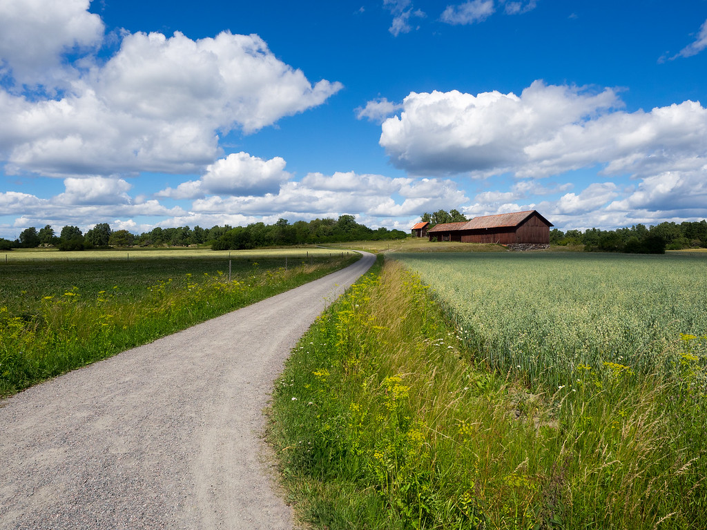 Big skies and red barns on Birka.