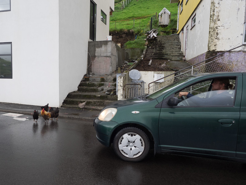 Traffic jam in Vestmanna! Chickens seem to roam freely in a lot of Faroese villages.