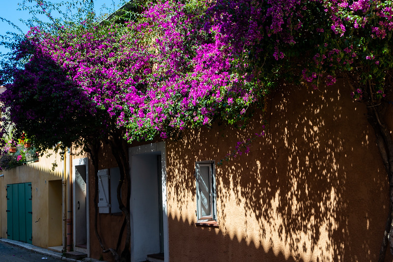 More Bougainvillea! It's everywhere!