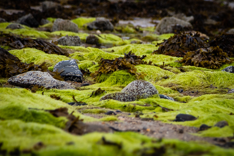 Mossy Rocks on the Beach Near Grand Bé