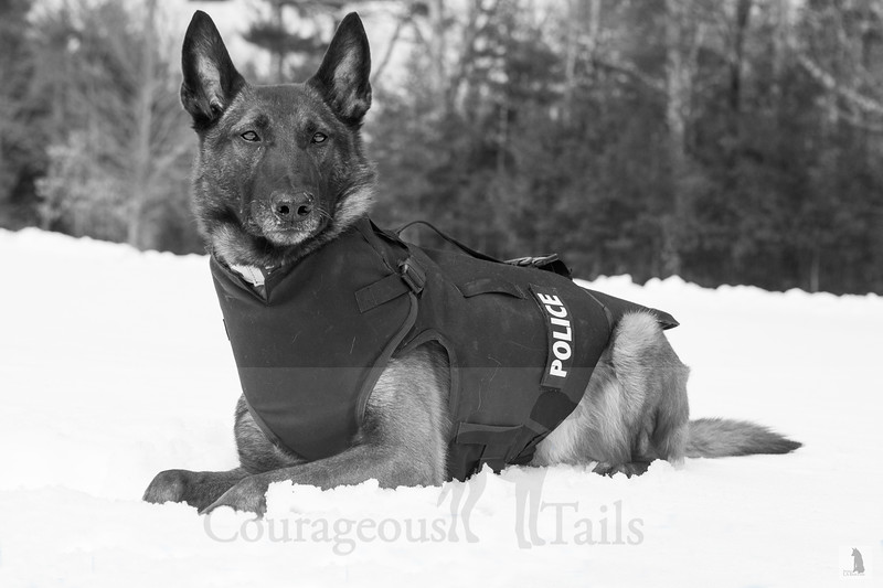K-9 Makker, East Kingston PD, East Kingston NH
