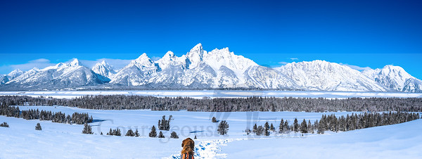 Otis, SAR, Grand Teton National Park, WY