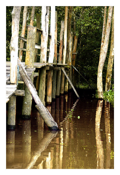 This is a photo of a pedestrian wood bridge at the beottom of a preserved rain forest. There are areas where tourist may get off the boat and walk through the thicket of the forest. Since it is usually flooded and very muddy the local people built pedestrian walks made of wood. the walk is usuall 18 to 24 inches above the water. This is a footbridge and it is about 3 feet above the water. This scene reminded me of those jungle movies I saw when I was a boy.