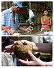 This man who is weilding the knifee is the uncle of the pretty young woman. She is assisting her uncle show us where Brazil nuts come from. Do you know that Brazil nuts come from this coconut-like-shell? About twent four or twenty eight of them neatly stacked in one shell!