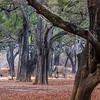 Ebony Forest