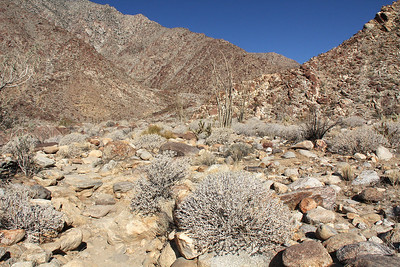 We start on our longest hike, up into Palm Canyon not far from the campground.