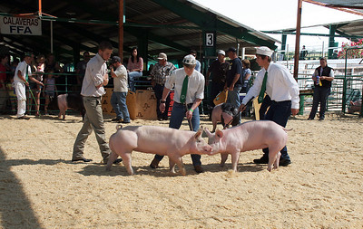 The pig judging contest was funny to watch.