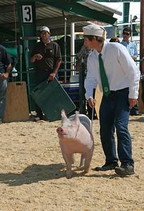 Pig Judging.
