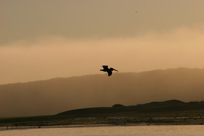 A Pelican flies by as dusk settles further.