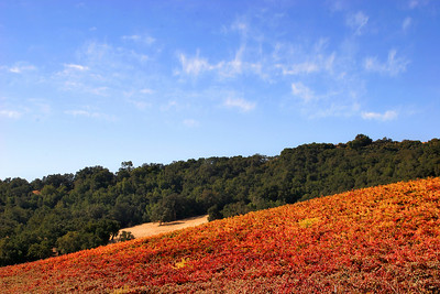 October color in the Paso Robles wine country.