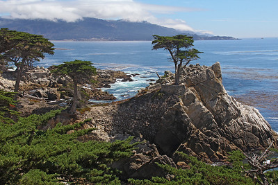 A closer look at the Lone Cypress, an iconic symbol of this part of the central California coast.
